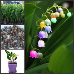 Wholesale High grade garden plants PC rare seven colourful bell orchid seeds miniascape flower seed