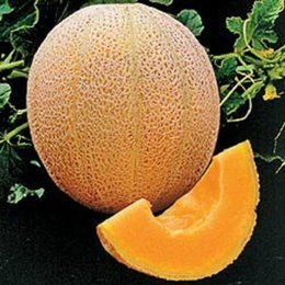 Wholesale New Rare HALES BEST CANTALOUPE SEEDS JUMBO MELON