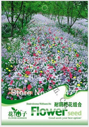 Shade tolerance Wildflower Mix,Shade tolerance Wildflower seeds,Mix seeds, about 200 particles
