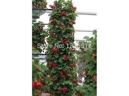 Скидка красный восхождение 300 Climbing красной клубники Семена очень большие и вкусные, Хеерлум овощи и семена фруктов