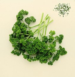 Wholesale 200 European vanilla vegetable seeds Parsley Seed Law rich fragrant with parsley SS167