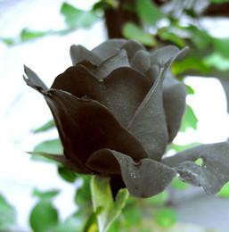 Wholesale China Rare Black Rose Flower Piece Seeds black roses Losing money earned reputation