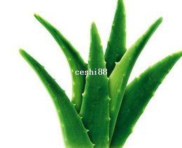 Vegetables and fruit seeds Aloe vera seeds edible beauty Edible cosmetic Bonsai plants Seeds for home & garden 100 seeds bag