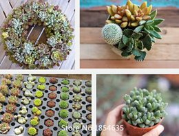 Wholesale Garden Plant bag mini desk Ornamental Succulent plant Seeds it has sucked the effect of formaldehyde and purify air Bo