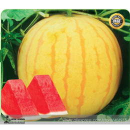 Heirloom 'Huang Pi Qiu' Yellow Skin Red Seedless Watermelon Seeds, Professional Pack, 5 Seeds   Pack, 13% Sugar Sweet Juicy