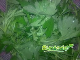 DIY Garden Asian NON GMO yimu herbseeds can enriceh the blood for woman best leonurus motherwort herba leonuri Leonurus heterophyllus Sweet