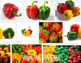 Wholesale Promotion Colorful Sweet Pepper Seeds Yellow Purple Red Green White orange black Mix Sweet Bell Pepper Seeds vegetable se