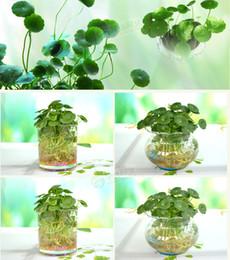 Wholesale 30pcs Hydroponics flower aquarium plants Penny grass seeds best indoor bonsai plant Hydrocotyle vulgaris seeds bags per