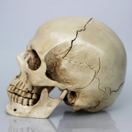 Wholesale Retro Carving Human Skull Replica Resin Model Medical Realistic Life size Halloween Items