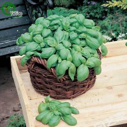Wholesale Sweet basil Seeds Flower Seeds Indoor Bonsai plant particles E017