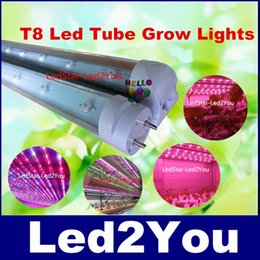 Wholesale High Productivity T8 W mm Led Grow Tube Lights Red nm Blue nm White Led For Indoor Hydroponic Plants Seedling And Growth