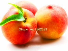 Wholesale 5 bag Apricot tree Seeds High survival Rate bonsai Fruit Seeds For Home Garden