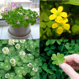 Wholesale Kinds Plants - Four-Leaf Clover Seeds - Grow Your Own Luck 4 leaf Seed Clover Summer Indoor Potted Plants Flowers Summer Flowers Kinds Of clover Seed 1164