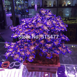 Wholesale Natural lapis lazuli tree Rich cash cow crystal tree tree Violet arenaceous town house feng shui furnishing articles