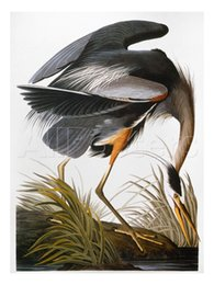 Wholesale Wall decoration for office high quality John James Audubon s hand painted oil paintings Audubon Heron