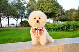 Pet baby collar bow scarf with cat and dog slobber dog pet towel scarf pet bib 10pcs