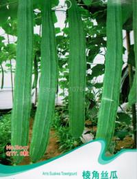 Wholesale Arris Towel Gourd Seeds Luffa Cylindrica Vegetable Plants B047