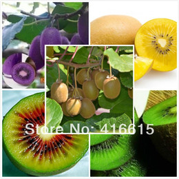 Wholesale 80seeds bag Fruit Seeds Four Kinds Kiwi Red Yellow Green Purple Nutrition Is Rich Tasty And Delicious DIY Home Garden NON GMO