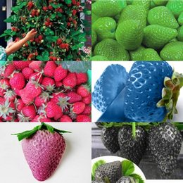 2016 8 kinds Strawberry Seeds, 1 Kind 200 Pcs, Total 1600 Pcs,Green Purple Rose White Black Red BLUE Climbing Strawberry Seeds HY1159