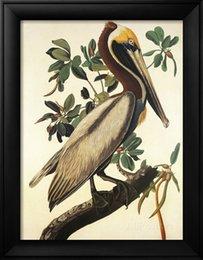 Wholesale John James Audubon decoration oil painting Brown Pelican famous artist reproduction