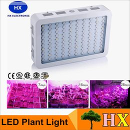 Wholesale Warranty Years Recommeded High Cost effective W W W LED Grow Light with band Full Spectrum for Hydroponic Systems