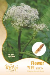 Wholesale Chinese herbal medicine is sweet Angelica seed dry to blood nourishing blood regulate the menstrual function can be potted bags per