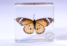 Wholesale Real Monarch butterflies in Acrylic Block Specimens In Clear Lucite Educational Instrument Specimen Set Lucite Treasures Octopus Paperweight