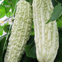 White bitter gourd Seeds garden plants Bonsai organic fruit and vegetable seeds 20pcs K020