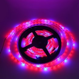 Eyoumy SMD 5050 60led plant growing light strip waterproof led light strip 300leds roll 5m roll DC 12V