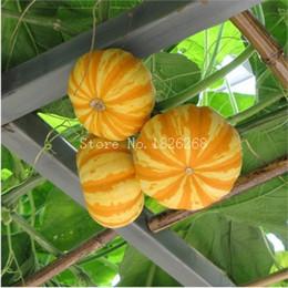 Wholesale Hot selling Mitral melon seeds Ornamental pumpkins seeds bonsai seeds DIY home garden