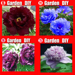 Wholesale -China's Peony Seeds Paeonia suffruticosa Tree 4 colors RED flower etc. 80 seeds. Separate,you will get 4 bags Free shipping