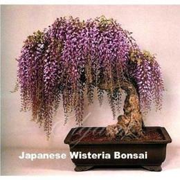 Цветковые деревья Онлайн-Глициния цветок 10 шт Семена для бонсай или дворе дерева Декоративные лоза Альпинист Лучшие Vines для контейнеров