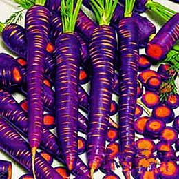 Wholesale 300pcs Vegetable Seeds Purple Dragon Carrot Seed Anti Aging Nourishing Bonsai Plants Seeds For Home Garden