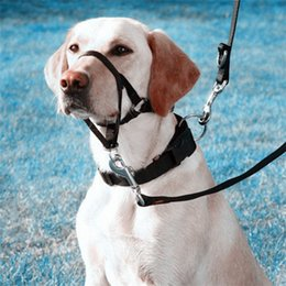 Wholesale XIANGJUN new rope pet dog mouth muzzle nose ring Gouzui riot training dogs rushed to pull the dog leashes dog special