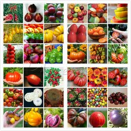 Wholesale Mix Tomato Seeds Vegetable Great Addition to Your Garden