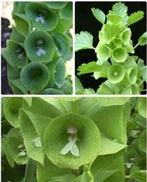30 Seeds Shell flower Organic vegetable seeds Russian Heirloom Vegetable Varieties Seed Plant seeds for garden A003