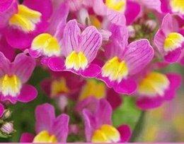 Buena pesca en venta-500pcs un sauce del arco iris del conjunto en las semillas de flor de los pescados INICIO JARDÍN DIY BUEN REGALO PARA SU AMIGO Por favor acaricie
