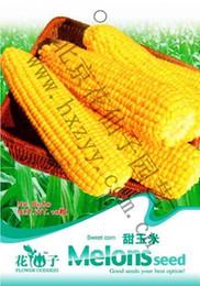 Wholesale Vegetable sweet corn Seeds Original Package Garden bonsai vegetables sugar corn seeds Super Easy Grow