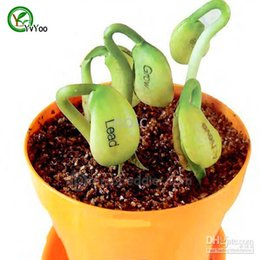 Wholesale Bonsai Plant Magic bean Seed Gift Plant Growing Message Word Love Office Home Very easy to grow H035