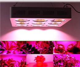 Led grow bleu ampoule à vendre-Le meilleur plein spectre 900w LED cultive la lampe légère IR, UV, ROUGE, BLEU, ORANGE Pour les plantes de fleur Croissance et croissance végétative conduit ampoule de puissance élevée