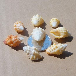 Wholesale Natural small conch banana rock screw cm point of conch shells of coral starfish aquarium wall platform