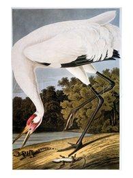 Wholesale John James Audubon decoration oil painting Whooping Crane famous artist reproduction