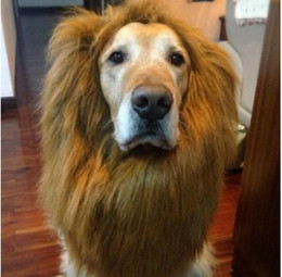 Большие костюмы для собак Онлайн-Pet костюм собаки Хэллоуин Одежда Костюмированный Up Lion Mane парик для больших собак
