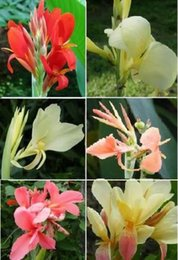 Flower seeds 10pcs Bonsai seeds canna seeds magic spring flowers and Plants seeds for garden A008