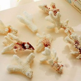 Wholesale Imported natural white coral yuan a pound of crushed coral aquarium bedding decoration wall decoration Home Furnishing platform