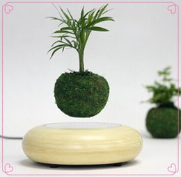 Wholesale 1 dhl New Design Magnetic Floating Air Plants Bonsai In The Air