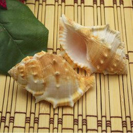 Wholesale Natural conch shell crafts decoration aquarium decoration ornaments of Mediterranean style frog screw