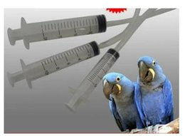 Wholesale 5ML New arrival plastic material syringes slip tip for parrot measuring nutrient cartridge refill ink syring