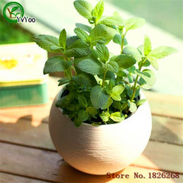 Wholesale 30 Seeds Mint Peppermint Lemon Balm Thailand Aromatic Leaves B023