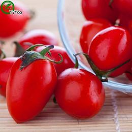 Tomato Seeds Bonsai garden plant non-GMO organic vegetable seeds 50pcs E010